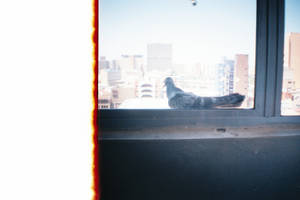 Burn + Pigeon
