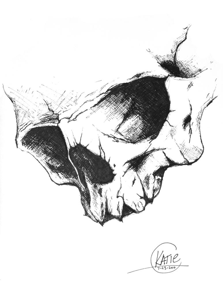 Skull sketch by katieraff