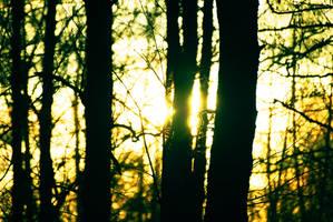 last remaining light by Andezigi