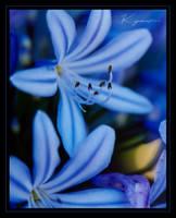 Blue by Kyndelfire