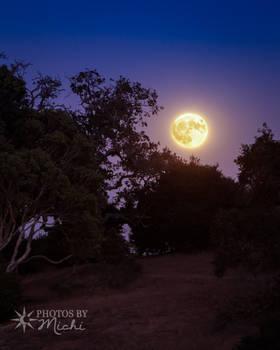 Harvest Moonrise