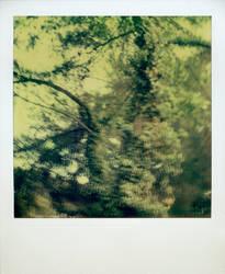 Huorns by En-GeL