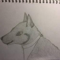 A grey dog by DragonShadow2