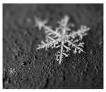 -piece of winter- by fangedfem