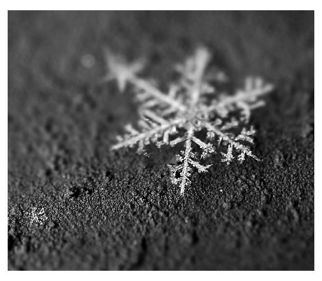 -piece of winter-