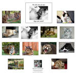 For the love of cats calendar