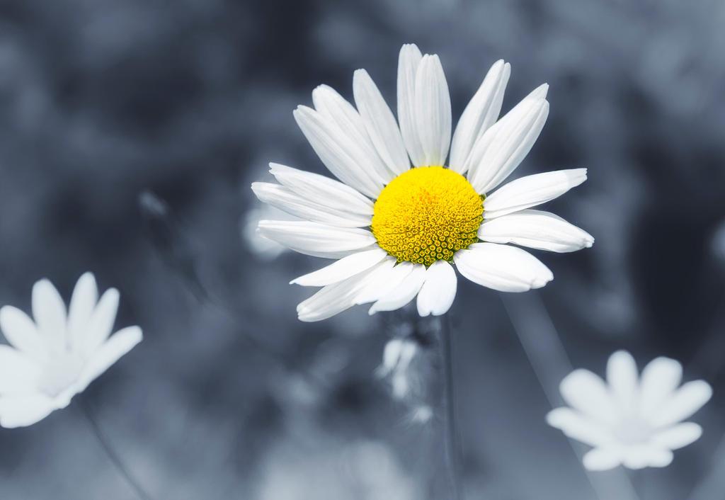 My Flower Child... by oli-one