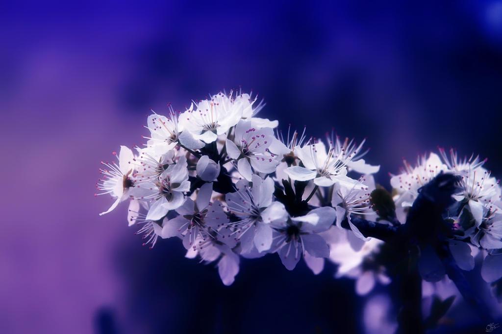 Purple Feelings by oli-one