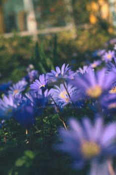 Purple flowers 2021