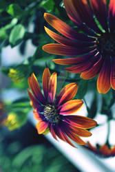 summer flowers 2021
