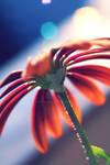 summer flower 2021
