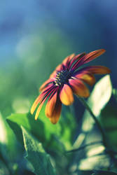 good light for the summer flower