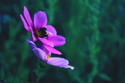 Summer flowers with bumblebee