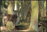 Meeting Bambis Mum