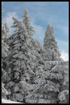 Candied fir trees