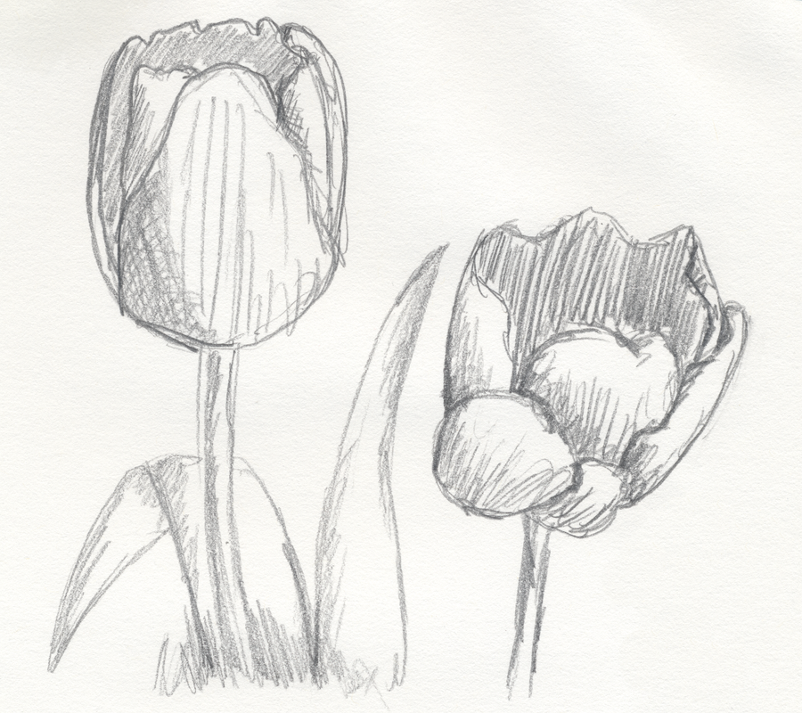 tulips sketch by cheekydesignz