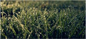 Morning Dew II by Mr-Heli