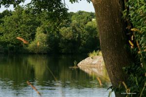 The Pond II by Mr-Heli