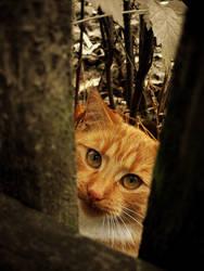 Ginger Cat by Niuchaczaus