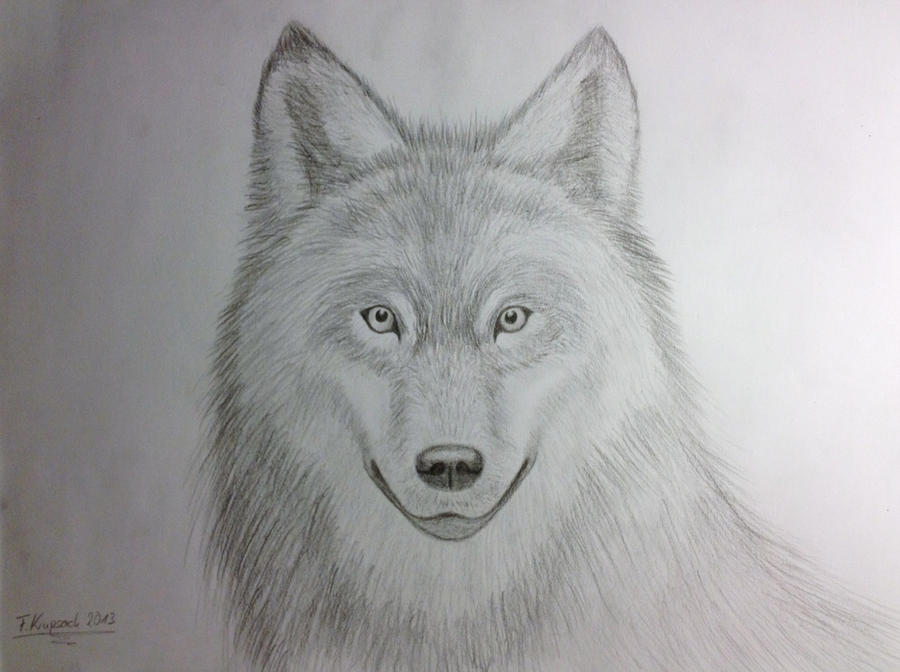 Wolf realistic pencil drawing by krupping