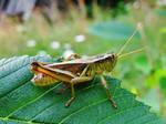 Locust Stock (Premium Content Available) by SpiderMilkshake