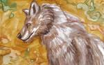 Wolf Watercolor Experimental by SpiderMilkshake