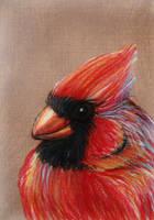 ACEO-Northern Cardinal by SpiderMilkshake