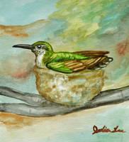 Rubythroat Hummingbird on the Nest by SpiderMilkshake