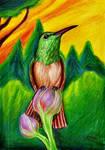 Rufous-Breasted Hummingbird