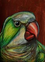 ACEO--Monk Parakeet by SpiderMilkshake