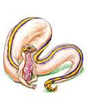 Huggable Snake Ball by SpiderMilkshake