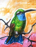 Large ACEO--Blue-Throated Hummingbird by SpiderMilkshake