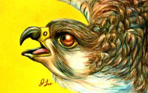 Alert Falcon by SpiderMilkshake