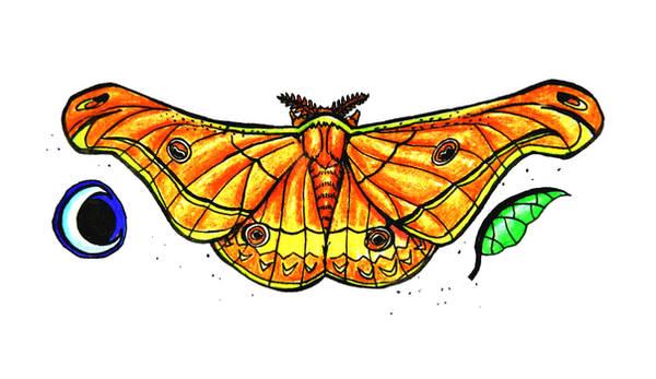 Emperor Moth by SpiderMilkshake