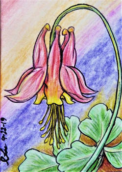 ACEO--Red Eastern Columbine