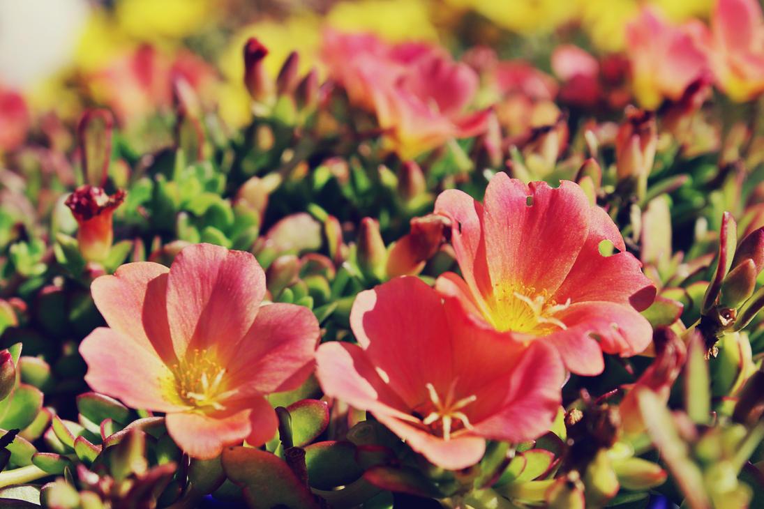 Pretty Little Pink Flowers By Danibridgman On Deviantart