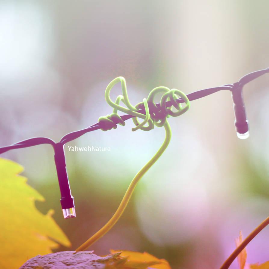 The Intertwining Romance by GeorgieDeeArt