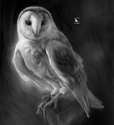 study barn owl