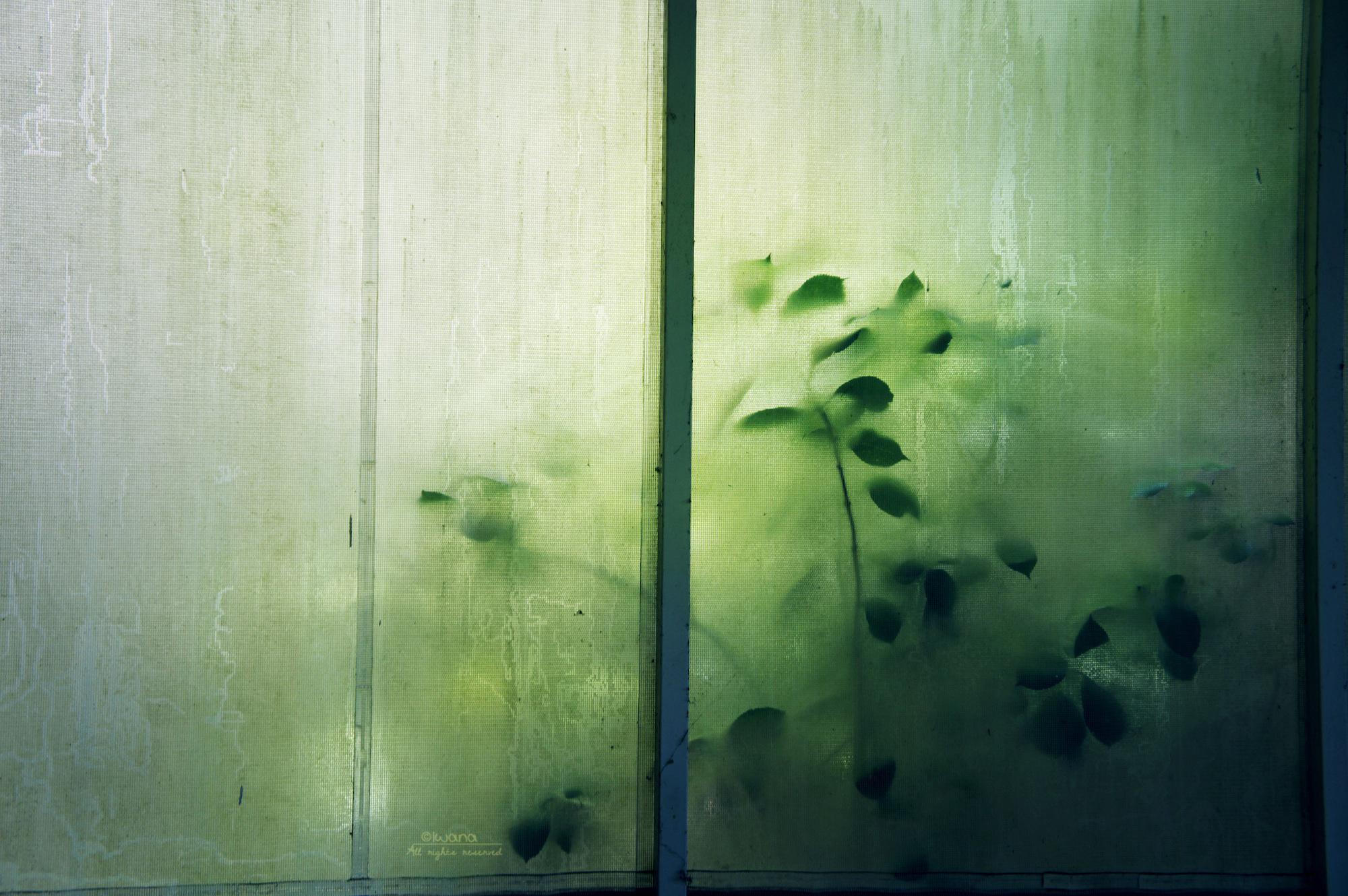 silhouettes by iwazakana