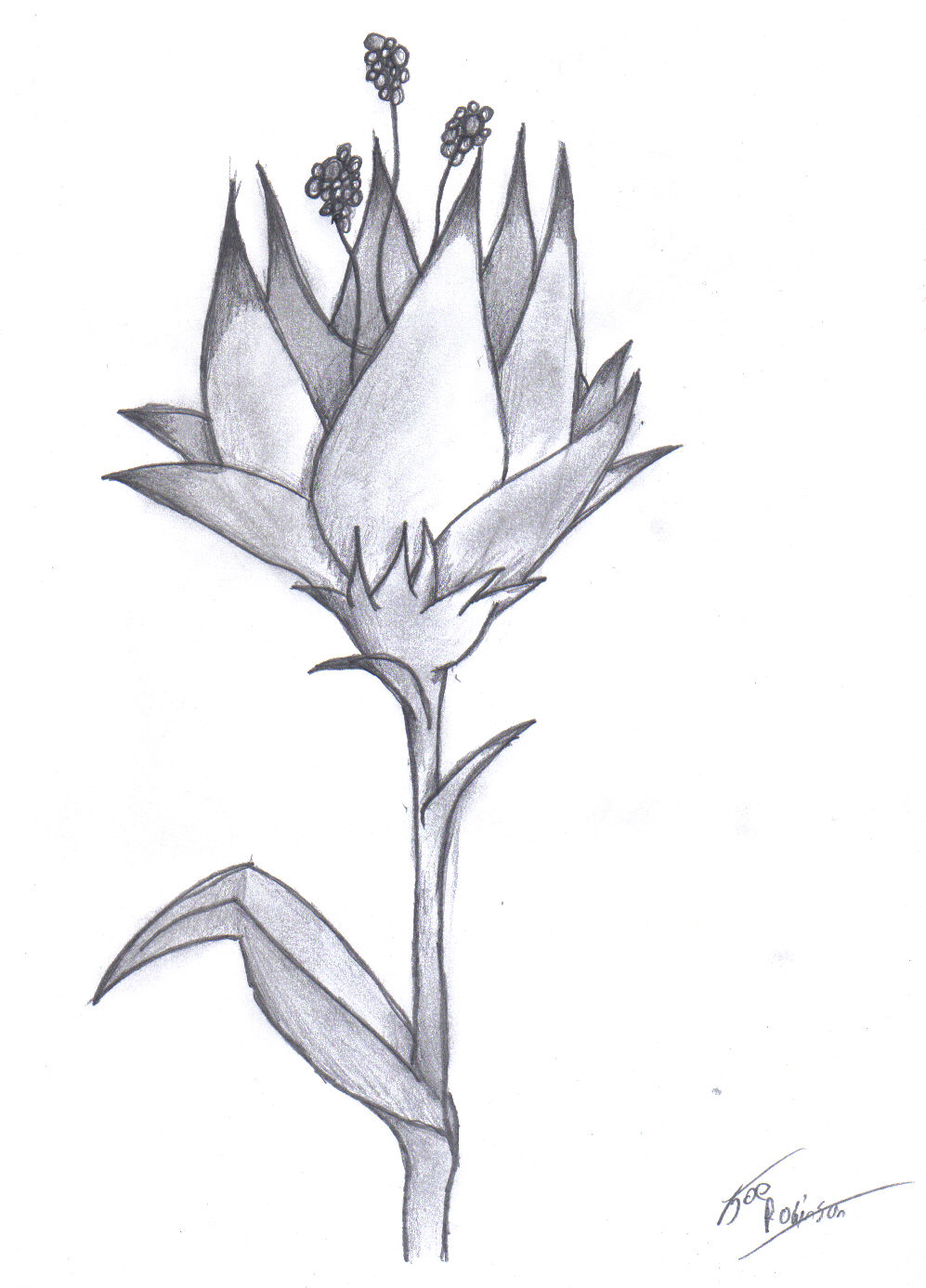 Easy Drawings Of Flowers In Pencil Flower Pencil by darkest-