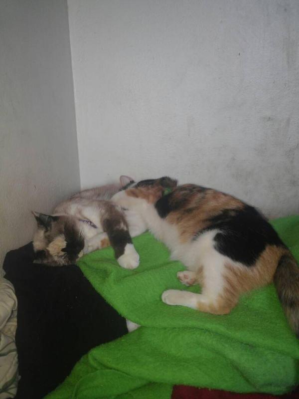 kitties by quetzalgirl