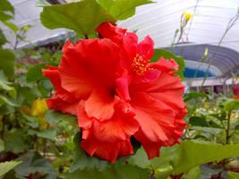 flower v2 by areev19