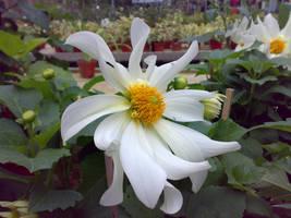 flower v5 by areev19