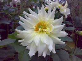flower v6 by areev19