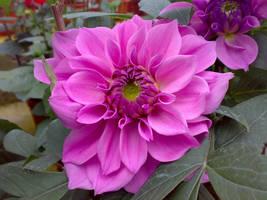 flower v7 by areev19