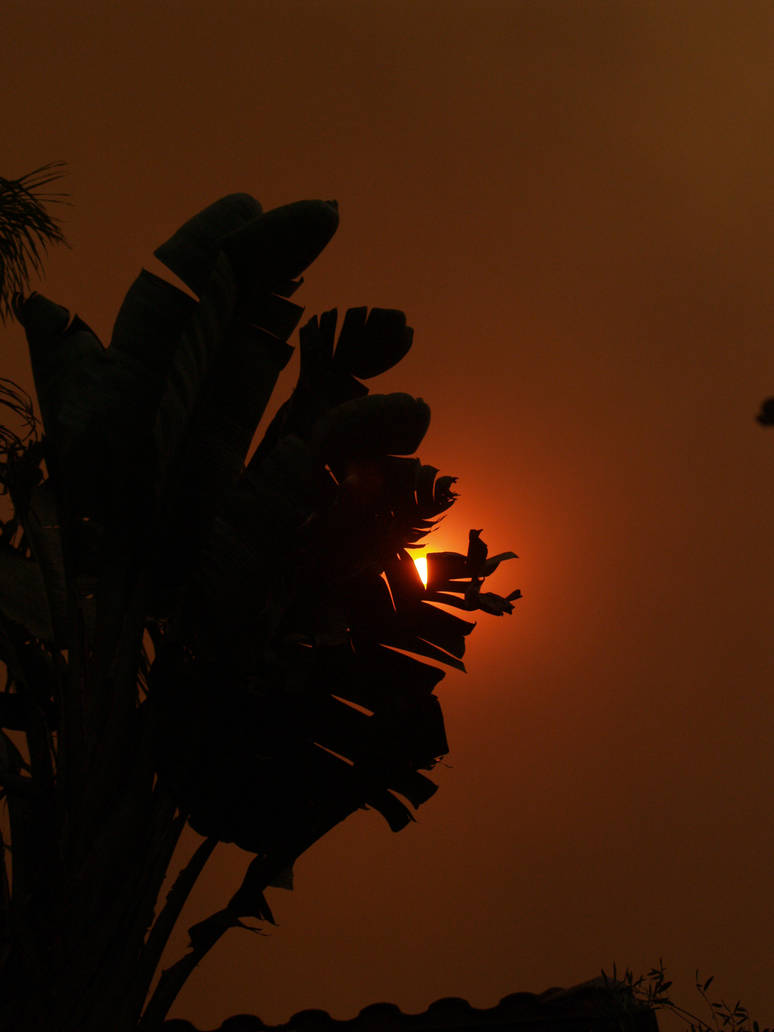 Photography: 2007 Fires - 4