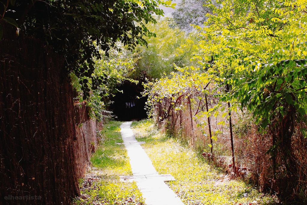 The surprising path by elheartista