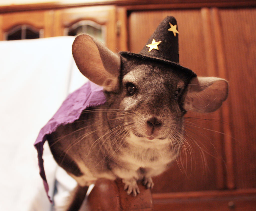 Basil Bones- Chinchilla Wizard by Urbane-Rebel