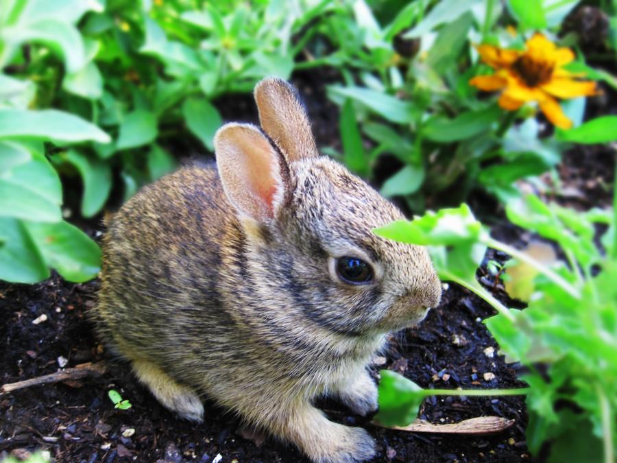 wild baby bunny by massimunex on DeviantArt