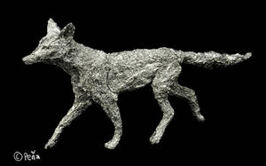 Foil coyote by Reptangle